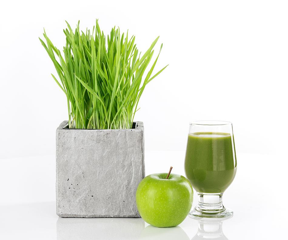wheat grass powder-juice