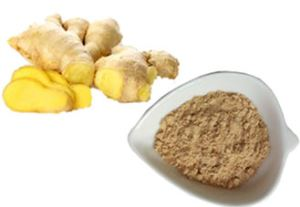 Organic Ginger Powder/ Dry Ginger Powder