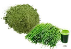 Organic Freeze Dried Wheatgrass Juice Powder