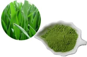non-GMO gluten-free no filler certified Organic green  Barley Grass Powder