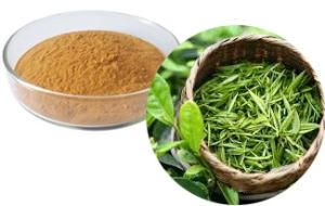Green tea (whole, cut, powder, extract powder)