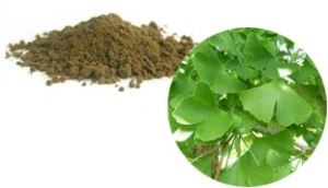 Ginkgo leaf/folium ginkgo biloba (whole, cut, powder, extract powder)
