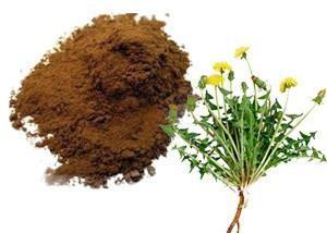 Dandelion root/taraxacum officinale (whole, slice, cut, powder, extract powder)