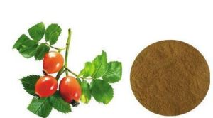 Organic Rosehips Extract Powder