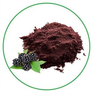 Natural BlackBerry Extract Powder