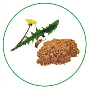 Dandelion Powder